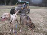 Jízda se psím spřežením