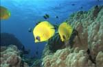 Kurz potápění - Open Water Diver